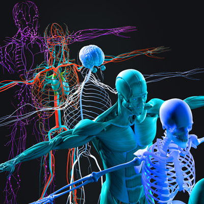 11 human body systems